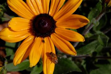 BES&Bee